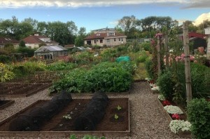Berridale Gardens and Allotments: What are they